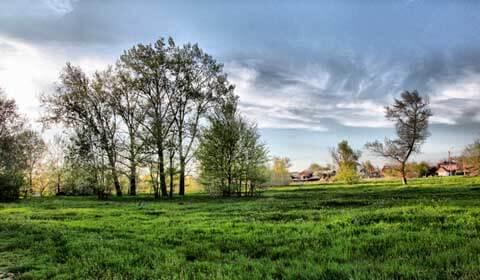 дерево,трава,поле,небо