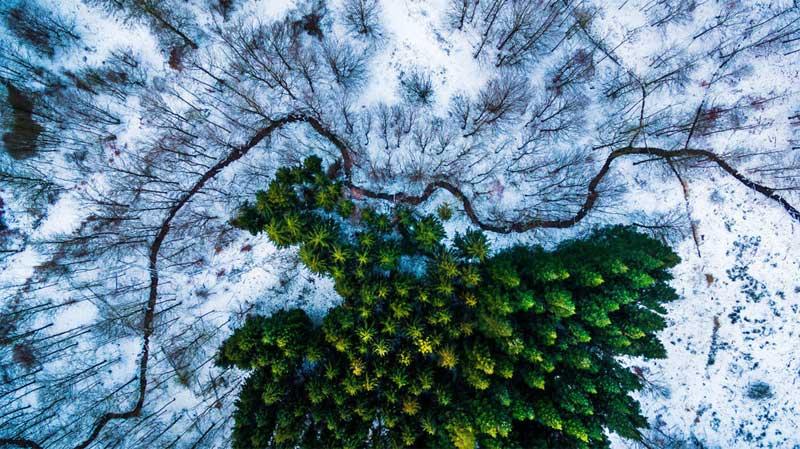 Лауреат 1 премии в характере и категории Дикая природа. Kalbyris леса в Дании.